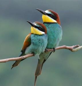 ptaki wiosna